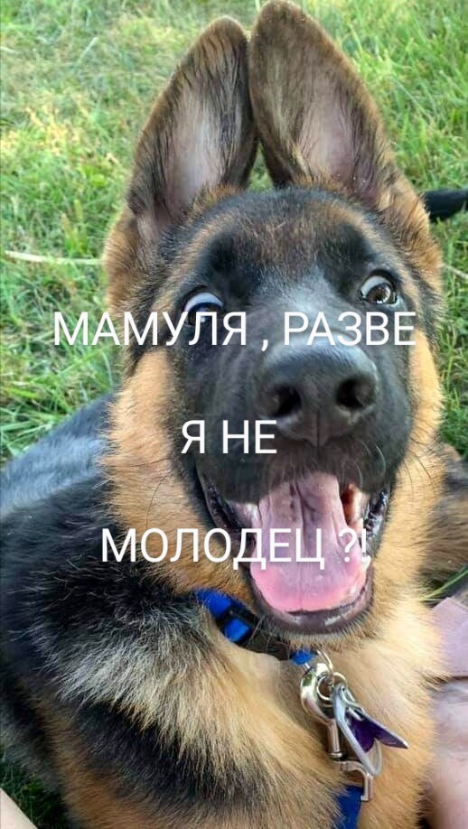 Вредные советы для собак