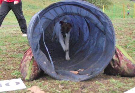 Фокс в туннеле, дубль первый